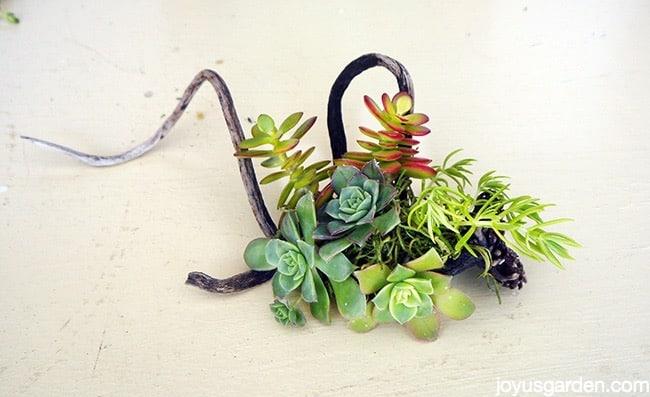Fun succulent creation