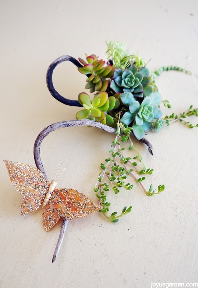 A Succulent Creation On A Wacky Sea Stick