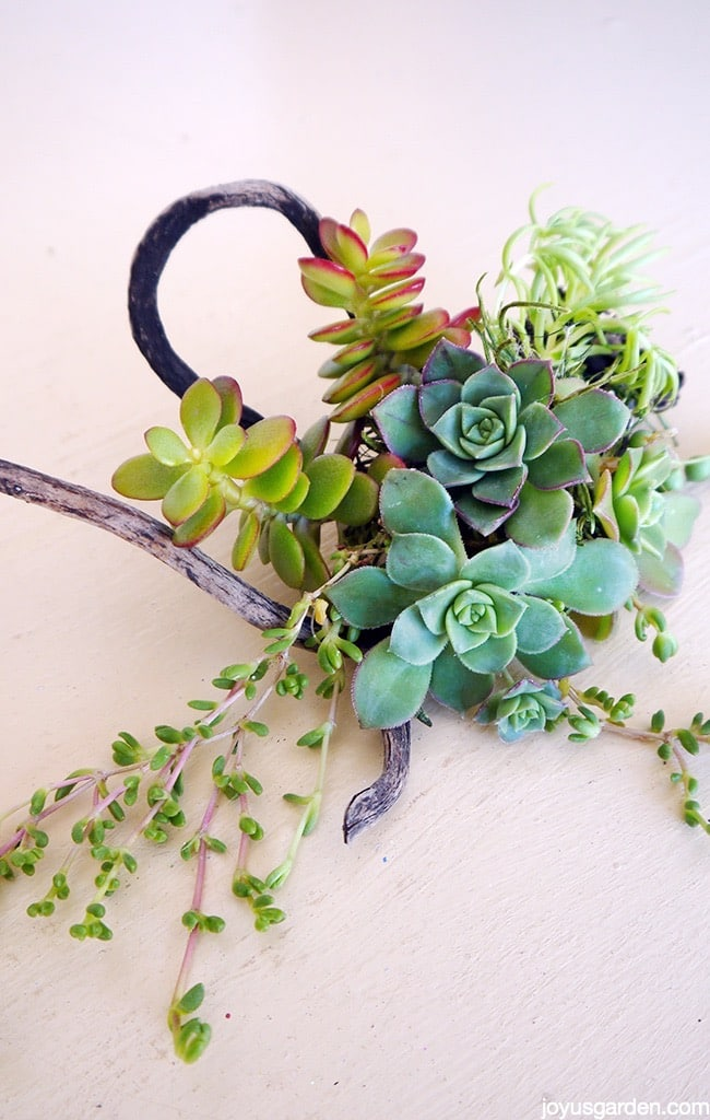 Unique succulent displays