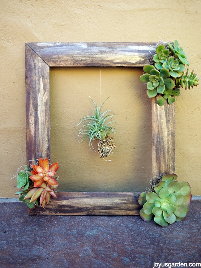 Completed succulent frame
