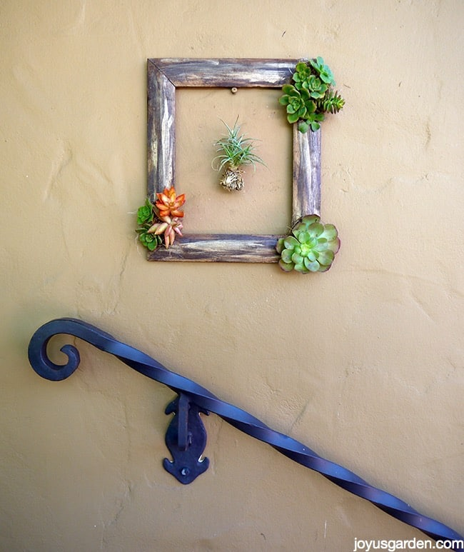 succulents in a recycled frame