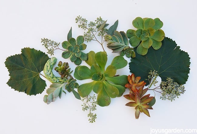 Foliage and succulent ingredients for fall