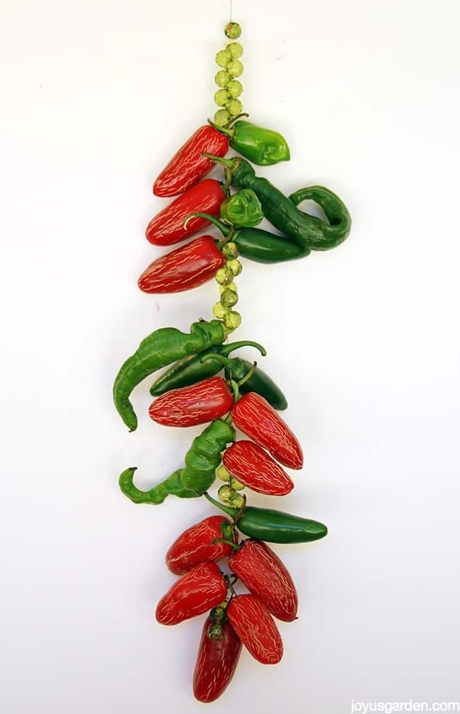 A Jalapeno Pepper Suncatcher