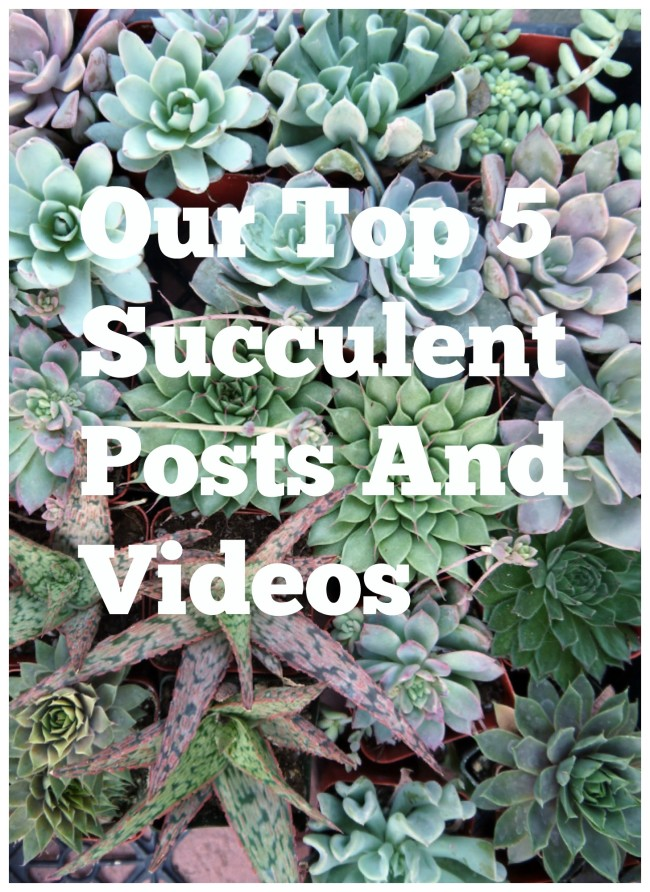 Top 5 Succulent Posts And Videos