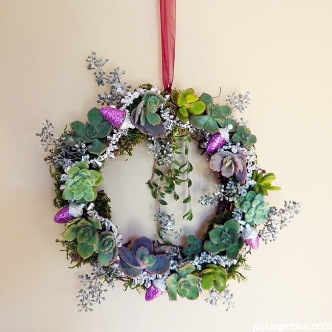 Holiday Succulent Wreath - Glitter and succulents