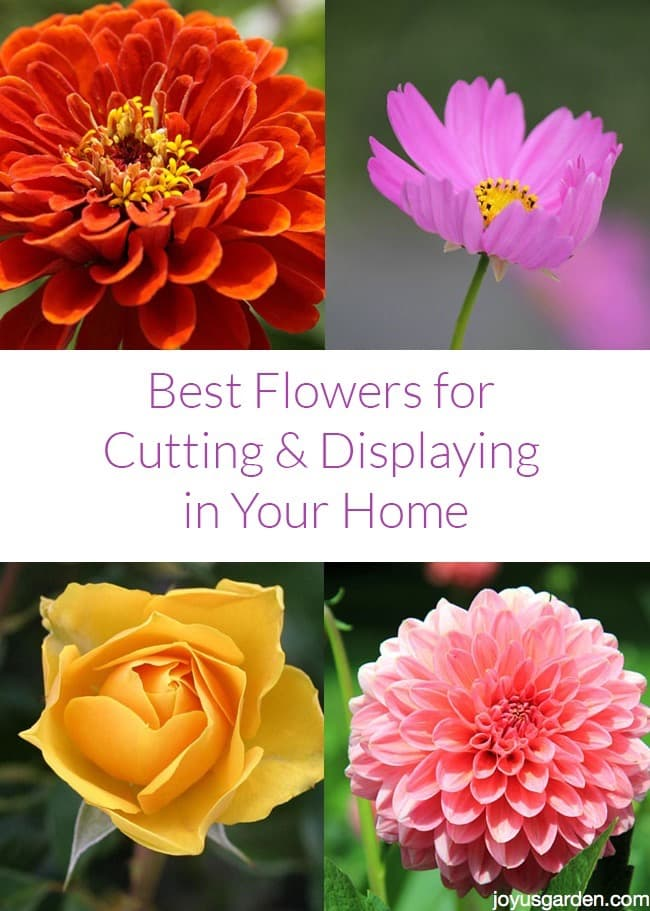 Best Flowers for Cutting & Displaying in Your Home