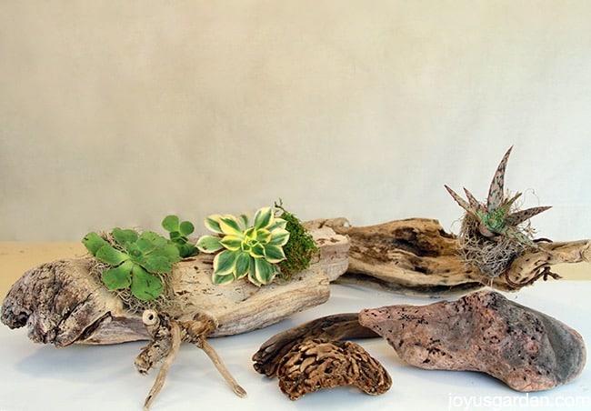 succulents & driftwood