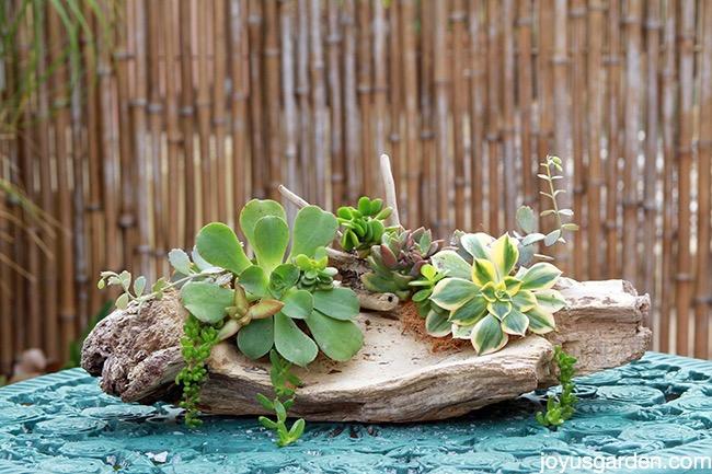 Completed driftwood succulent arrangement