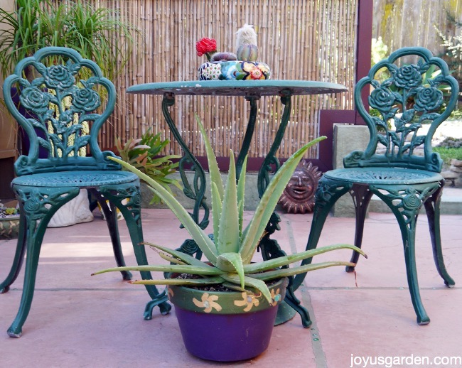 a large aloe vera plant in a purple pots grows on a patio in front of a green bistro set the text reads A Plant with Purpose: How To Care For Aloe Vera
