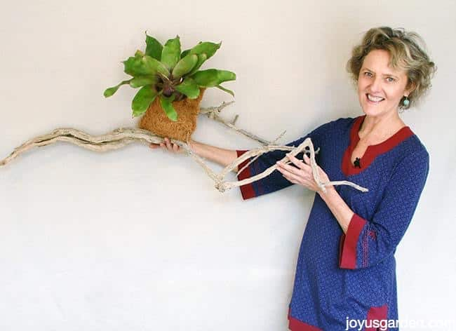 Grow Bromeliads On Driftwood Or A Branch