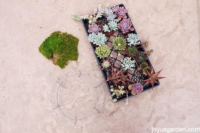 living succulent wreath craft