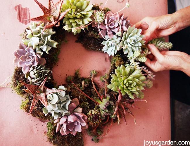 living succulent wreath DIY