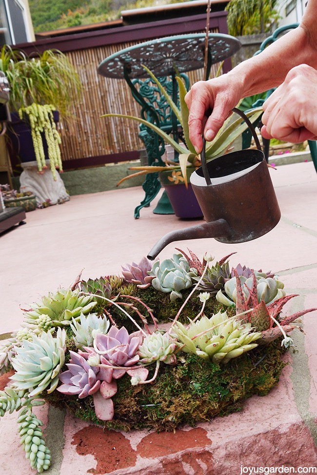 succulent wreath care