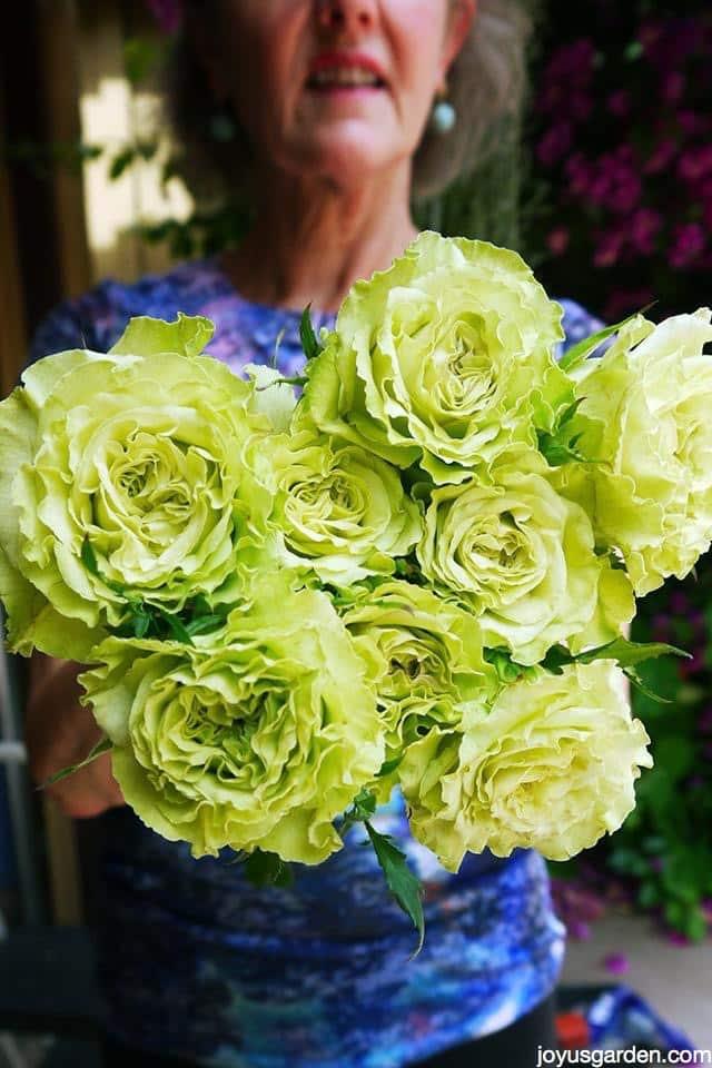 Stunning green roses