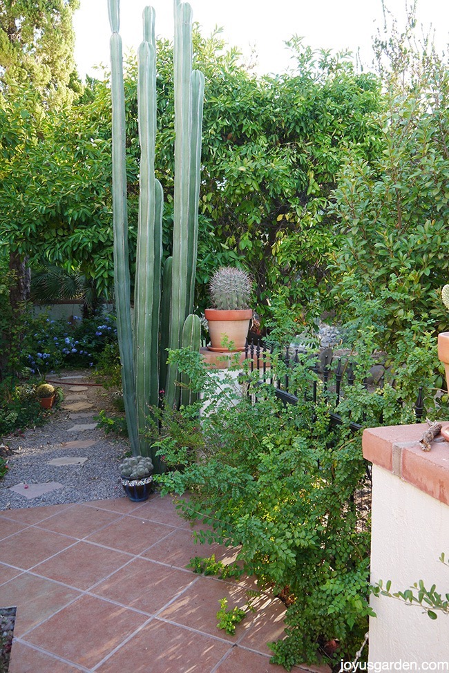 Tour my new Arizona desert garden