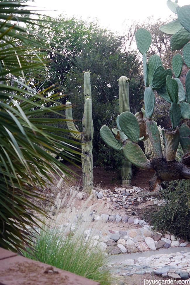 My Arizona desert garden