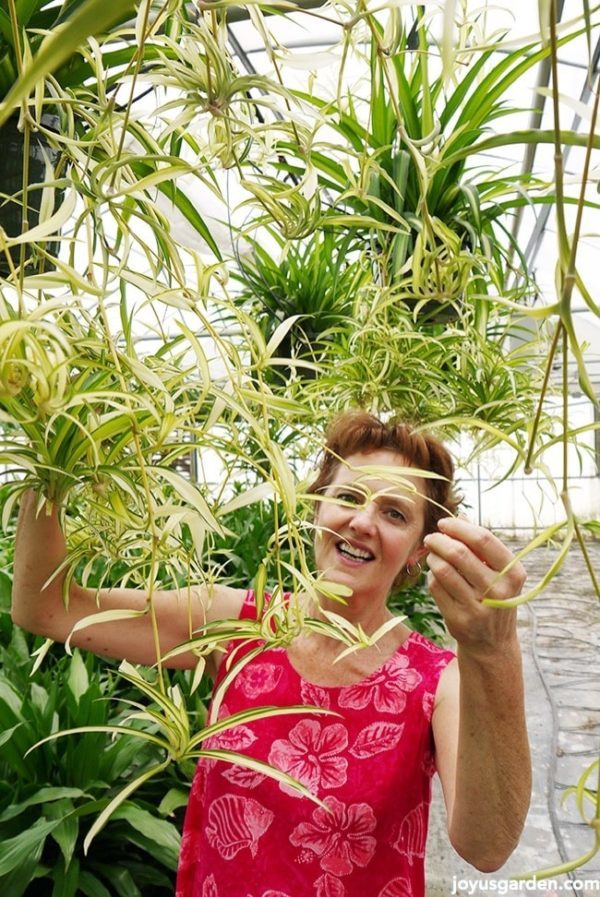 Nell in a bright pink dress underneath lots of hanging spider plants with babies