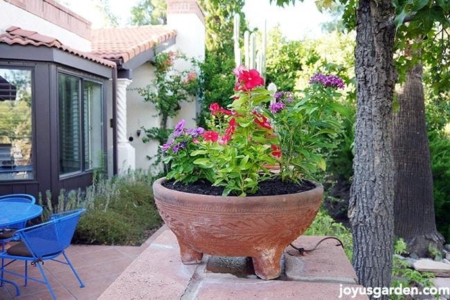 Flower Bowl Planting 101