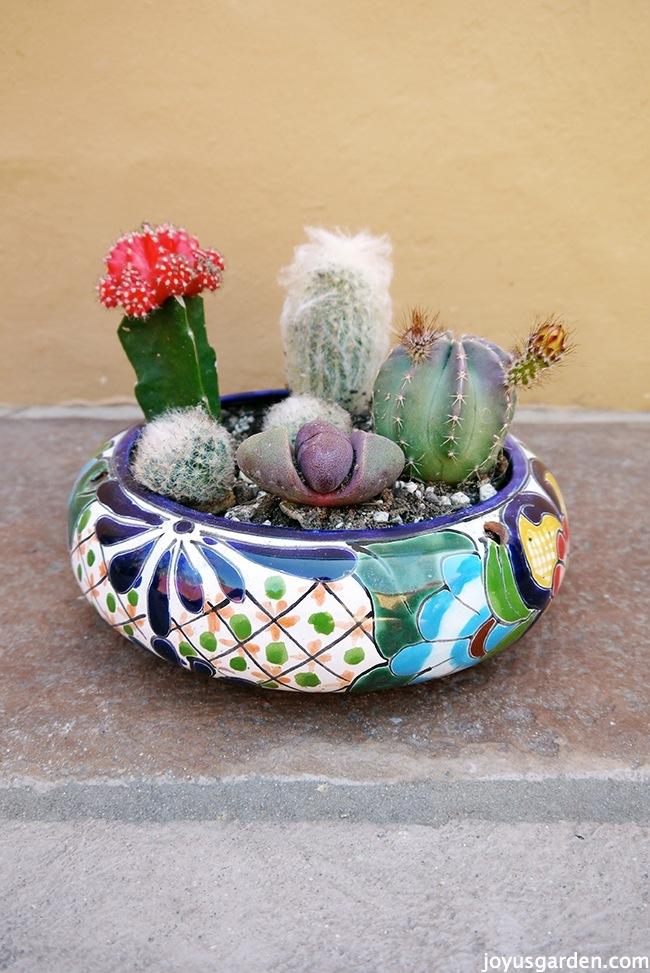 Cactus garden dish