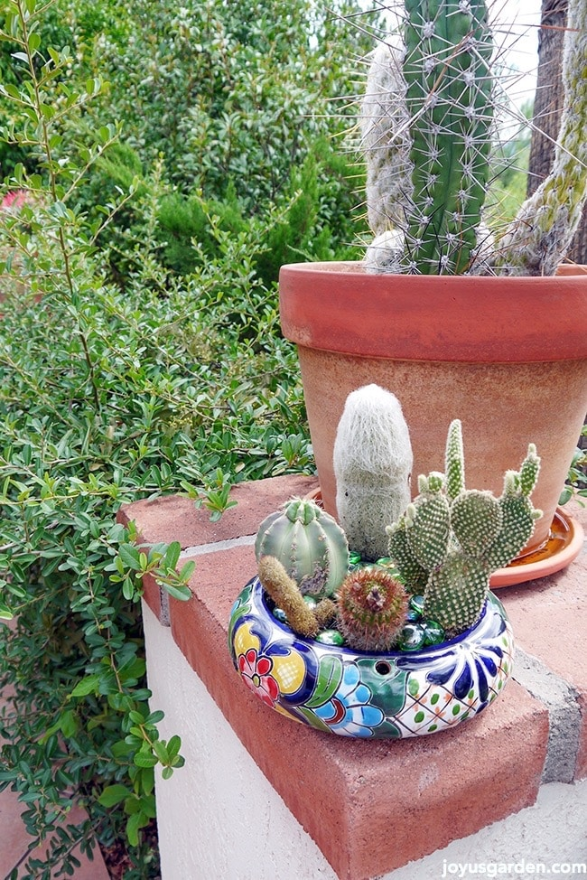 2 Cactus Dish Garden Makeovers