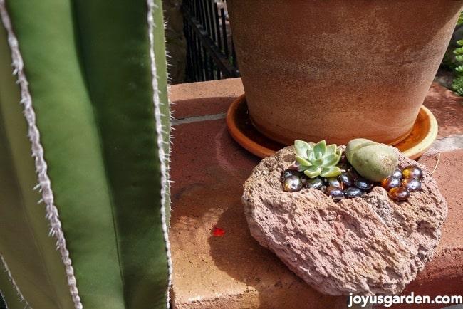 Small cactus gardens