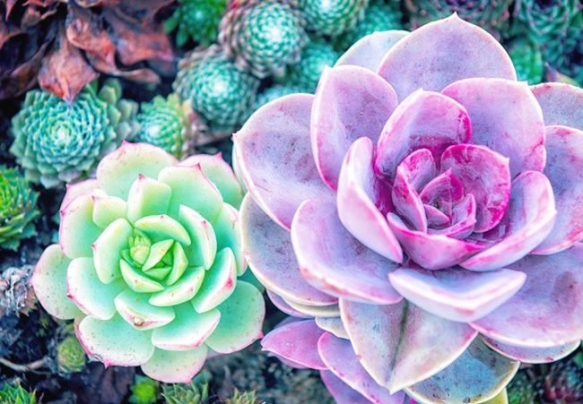 From The Colorful Paddle Plant To Adorable Burro S Tail Desert Plants Of All Shapes And Sizes Can Be Found Everywhere These Days Many Succulents