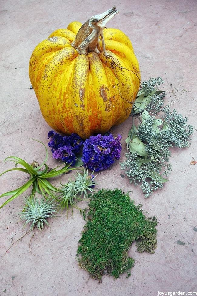 Mossy pumpkin decor