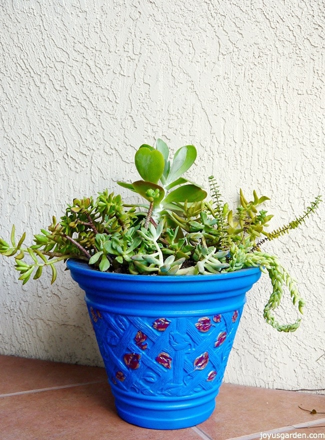 Planting My Medley Of Succulent Plants & Cuttings