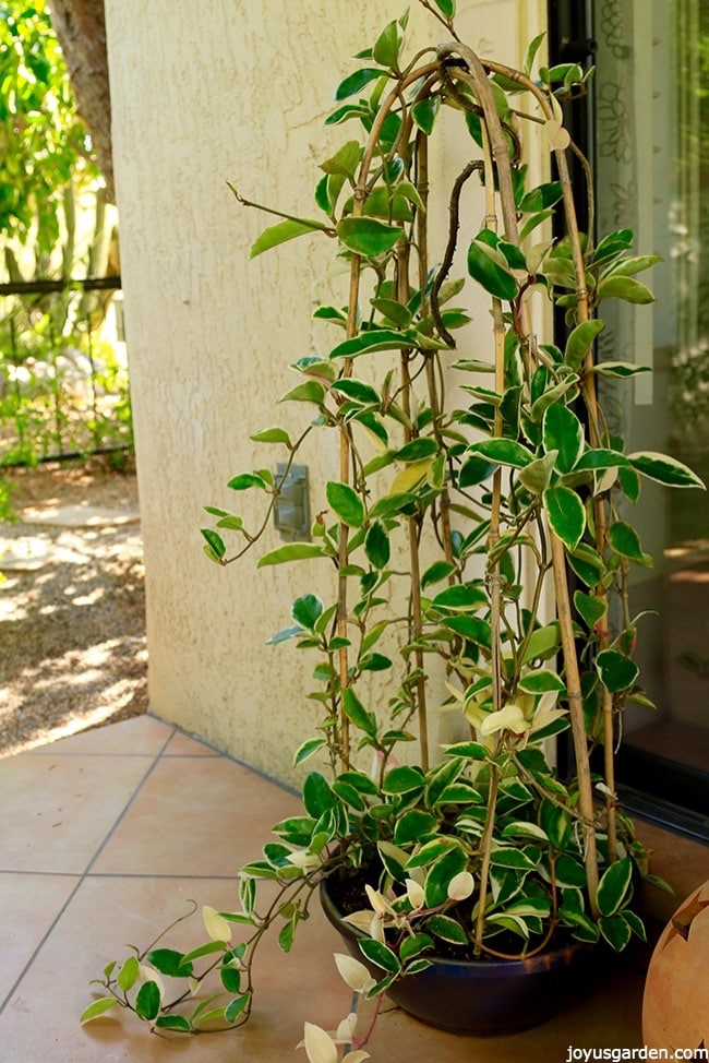 Plant Stand Indoor Houseplant