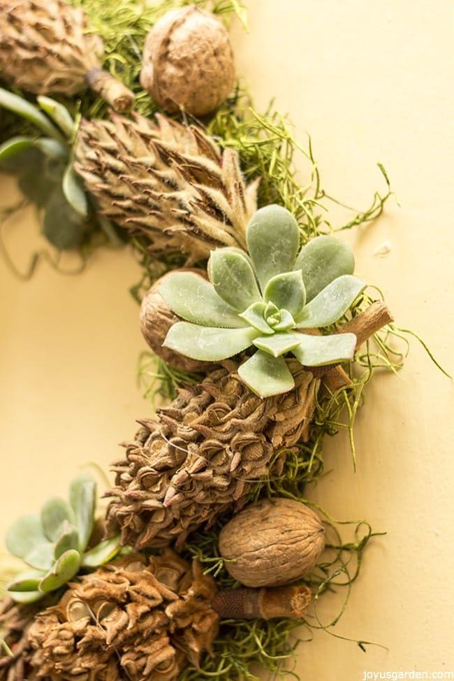An Easy DIY:  A Succulent, Magnolia Cone &  Walnut Adorned Wreath