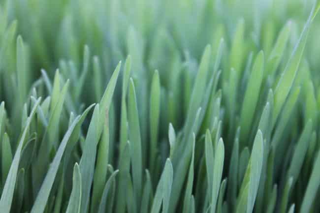 Nourish Your Soil Naturally