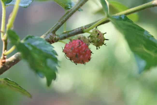natural-plant-fertilizers