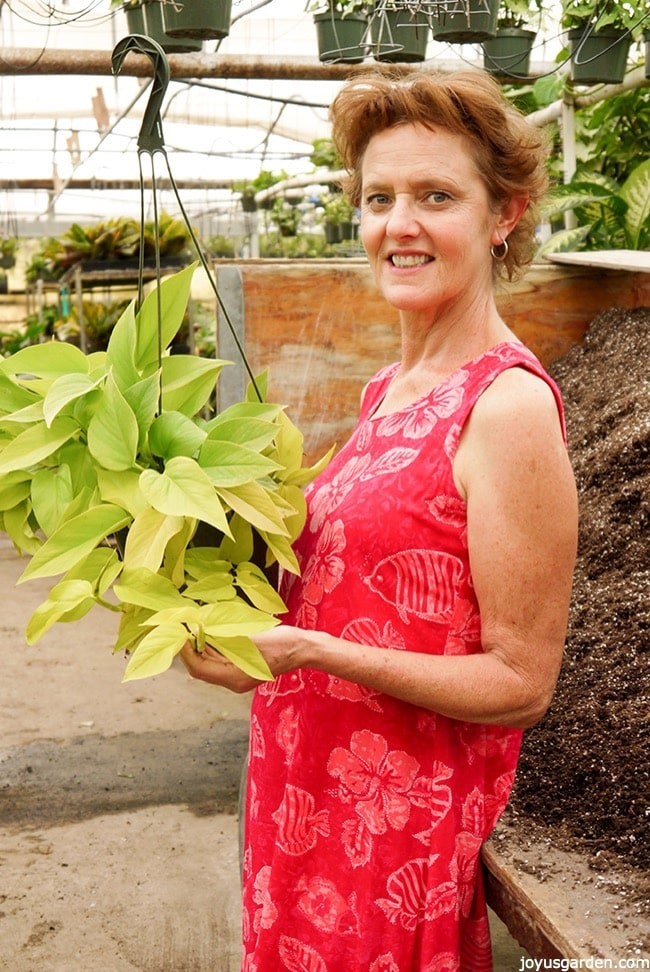 nell foster holds a bright chartreuse pothos neon in a greenhouse