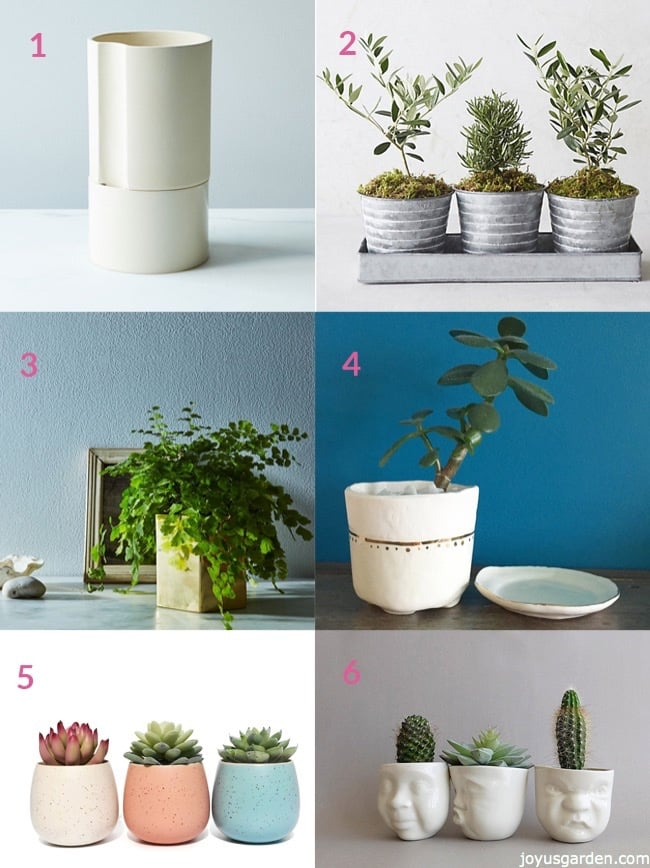 Small Pots For Succulents