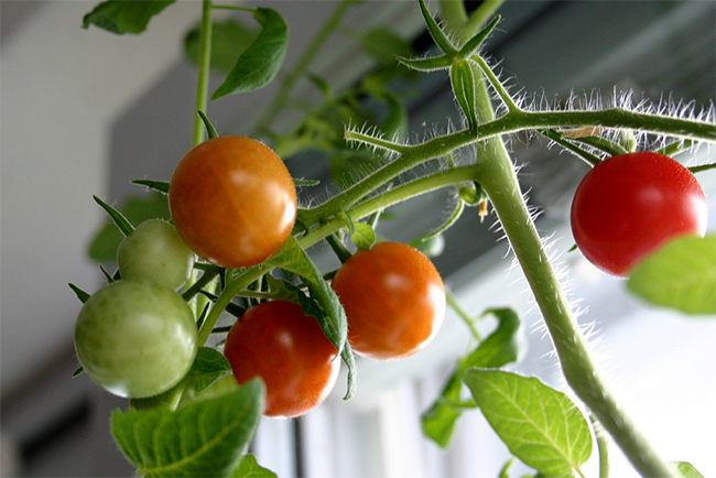 How to Grow Your Own Organic Food Indoors