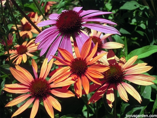 How To Successfully Plant Perennials