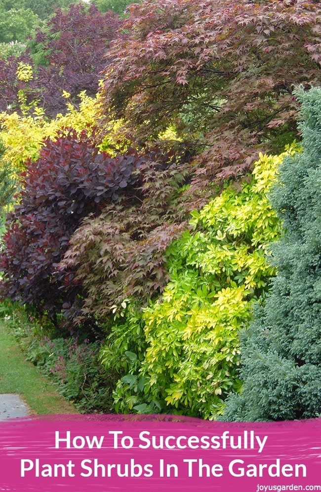 How To Successfully Plant Shrubs In The Garden