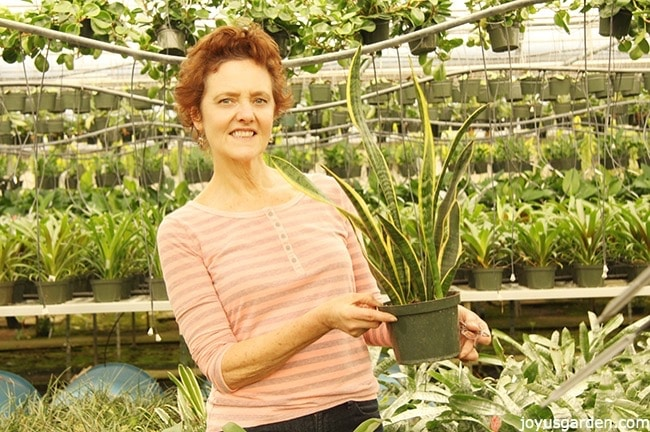 nell foster holds a snake plant sansevieria in a greenhouse with lots of other houseplants in the background