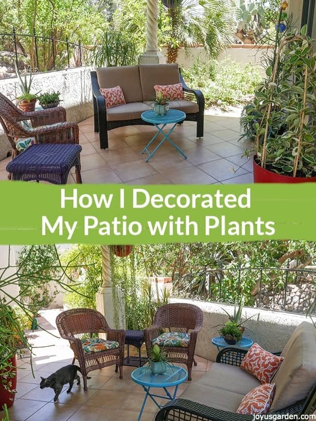 How I Decorated My Patio with Plants