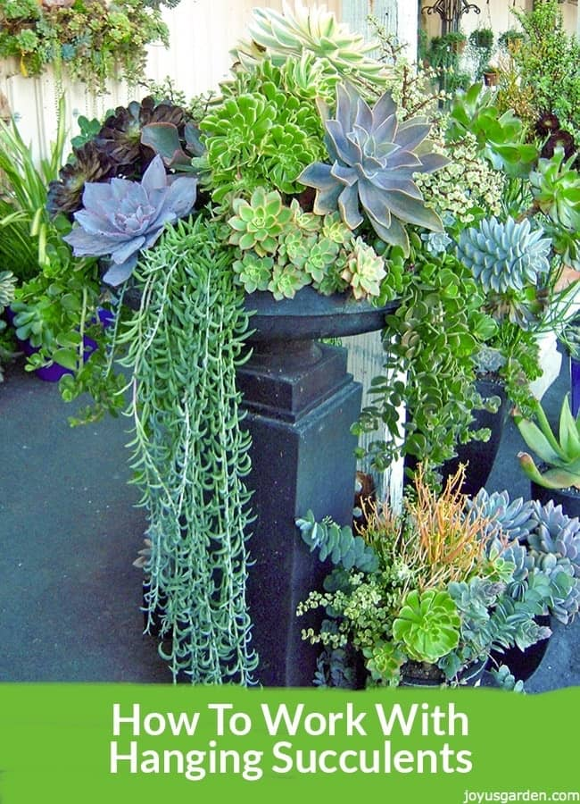 How To Work With Hanging Succulents Without All The Leaves Falling Off