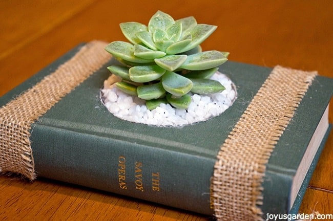 green vintage book used as a succulent container. the name of the book is The Savoy Operas and its written in golden letters