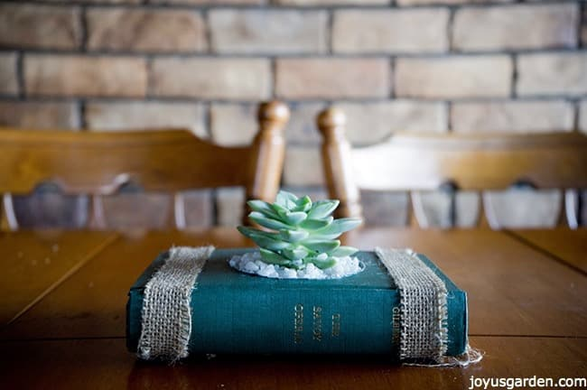 old book that has been transformed into a succulent planter, the book is on top of a kitchen table as the centerpiece