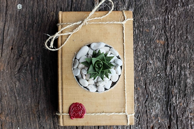 vintage book used as a succulent container