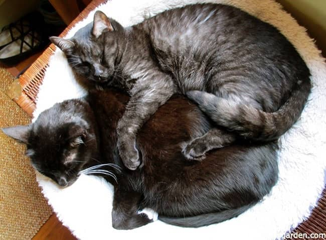 a black cat and a gray cat cuddling while they sleep