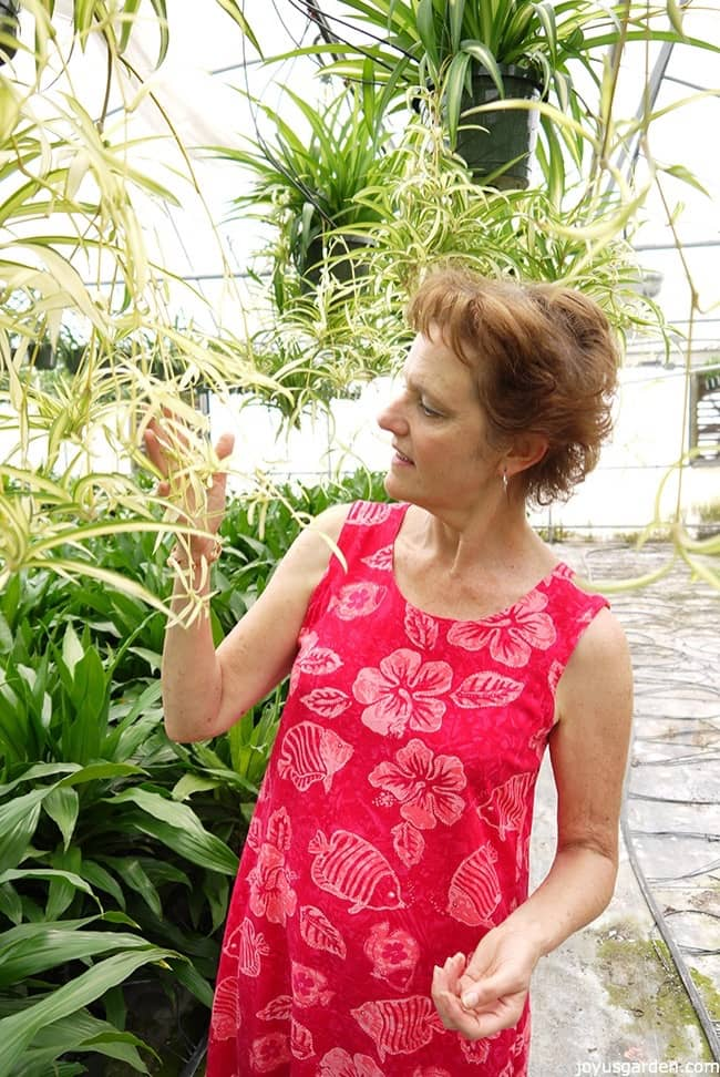 Nell Foster in a pink dress surrounded by spider plants & dracaenas in a greenhouse