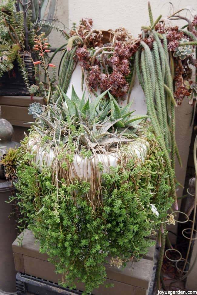 talk about succulents planted in unusual containers check this old toilet filled with succulents in the vase and the cistern