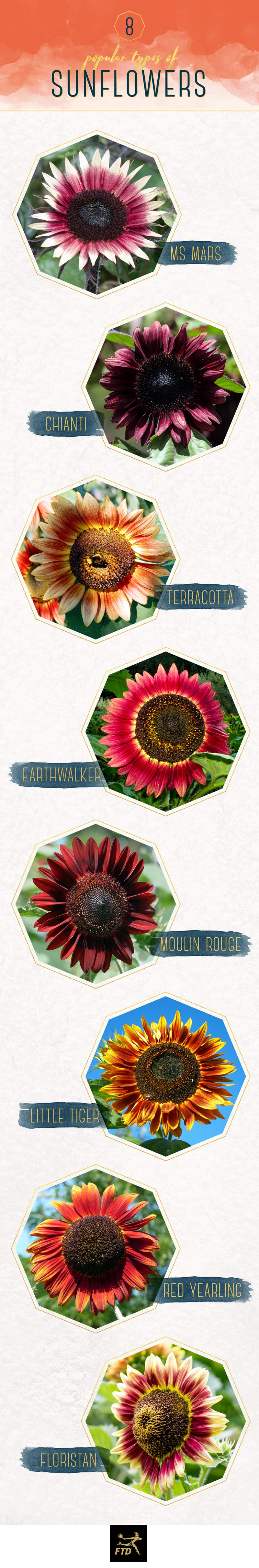 Because there are so many different types of colored sunflowers, FTD has created a visual guide to the eight most popular colored sunflowers.