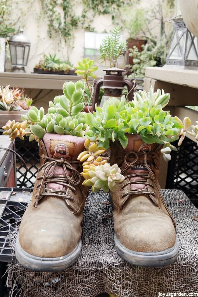 Succulents Planted In Unusual Containers Joy Us Garden