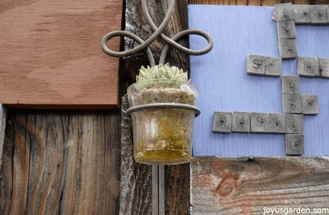 succulent planted inside a gass candle holder attached to the wall
