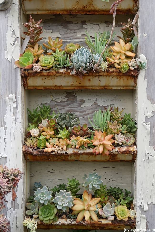 three rows of gutters planted with succulents they create a gorgeous display